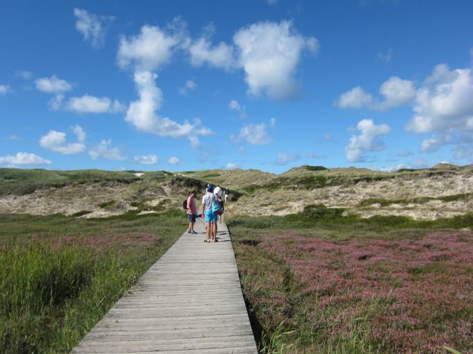 元々は波に寄せられた砂に覆われた土地に植栽した島だけに、植物の保護にも厳しい。植栽を守るためボードが張られた遊歩道。